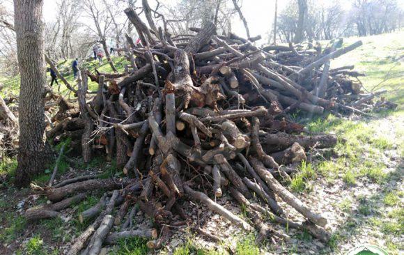 لەناو بردنی دارستان – سێف خواروو