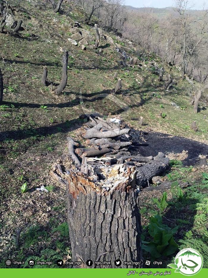 لەناو بردنی دارستان – گاگل
