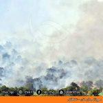سووتانی دارستان – نشکاش